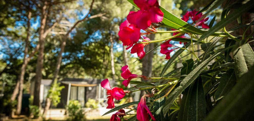 Fleurs du camping 4* Ma Prairie